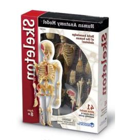 Learning Resources Human Anatomy Skeleton 41 Piece Model Kit